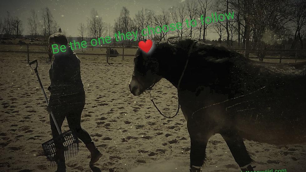 Bli trygg med din häst