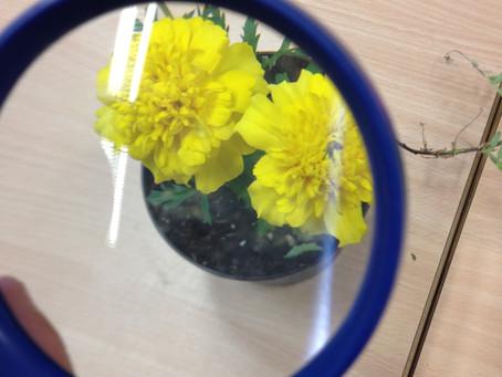 A cosa serve un fiore?