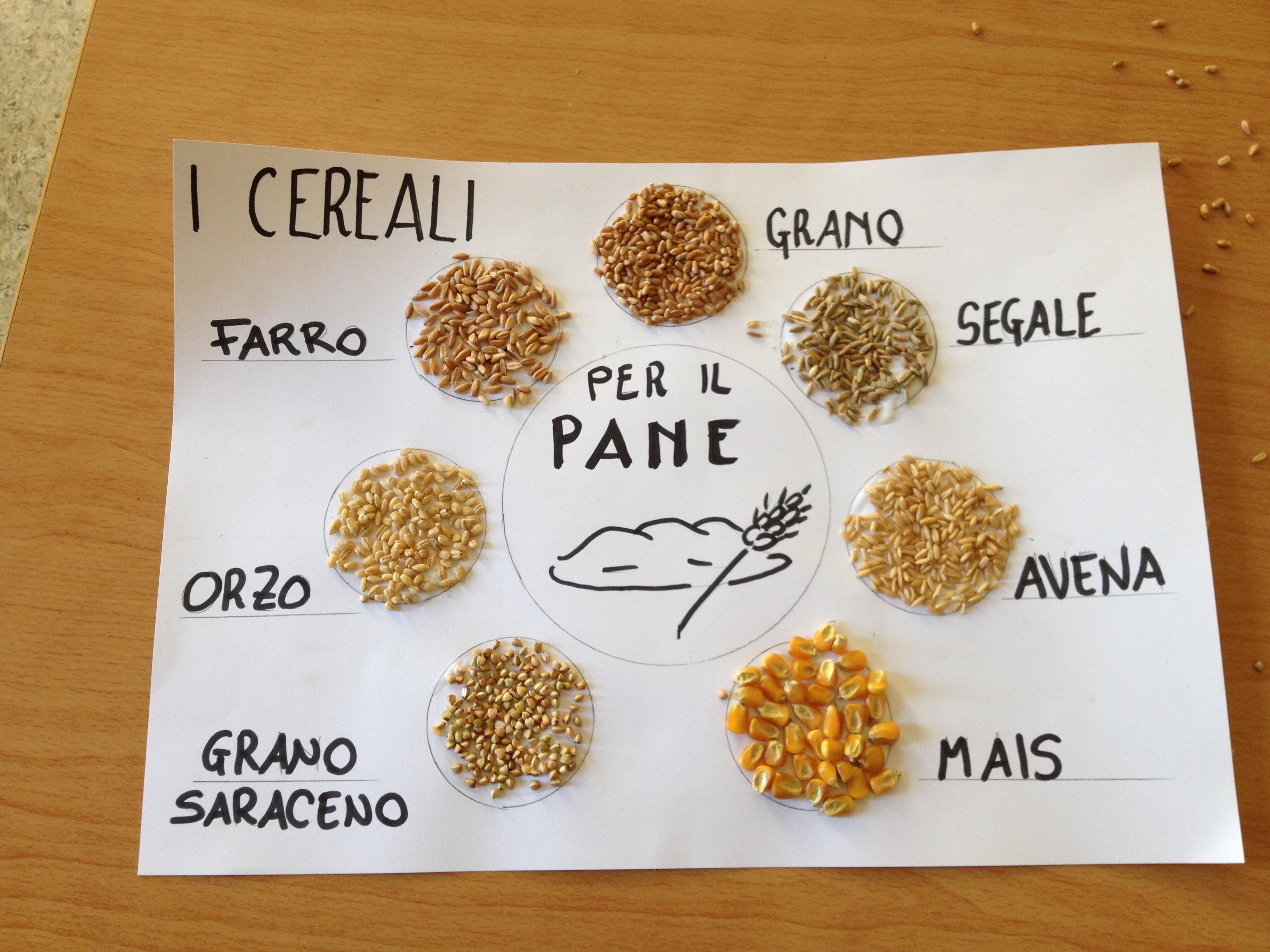 i cereali - biodiversità a tavola