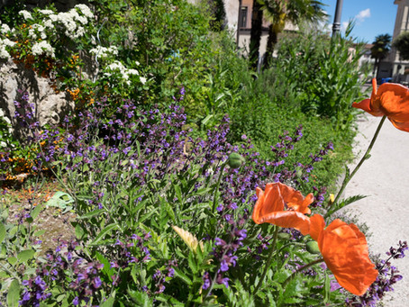 un giardino per api