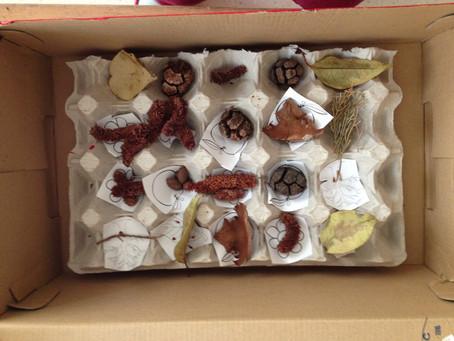 La scatola dei tesori degli alberi
