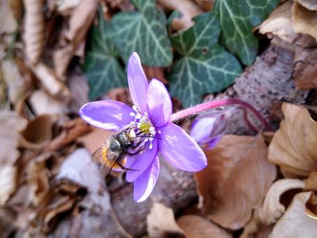 Marzo, il risveglio delle api 🐝