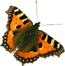 Orange Schmetterling 2