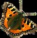 Papillon Orange 2