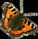 Orange Butterfly 2