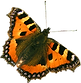 Orange Schmetterling 2