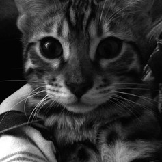 Enzo black and white.jpg