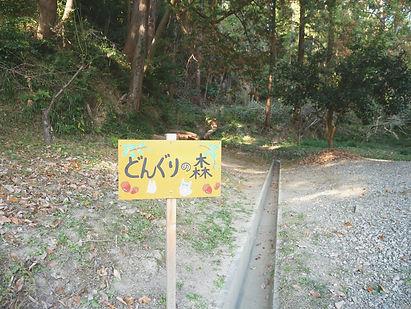 どんぐりの森.jpg