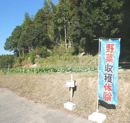 野菜収穫体験のぼり.jpg