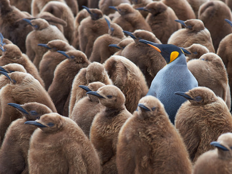 5 Ways to Stand Out From Your Competitors