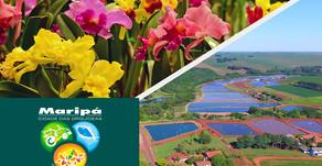 Maripá é o maior produtor de orquídea e 5º maior de tilápia do Estado