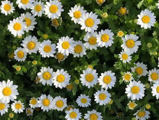 Empatia! Eu vejo flores em você!