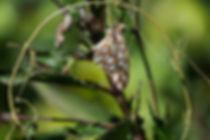 butterfly-332355_1920.jpg