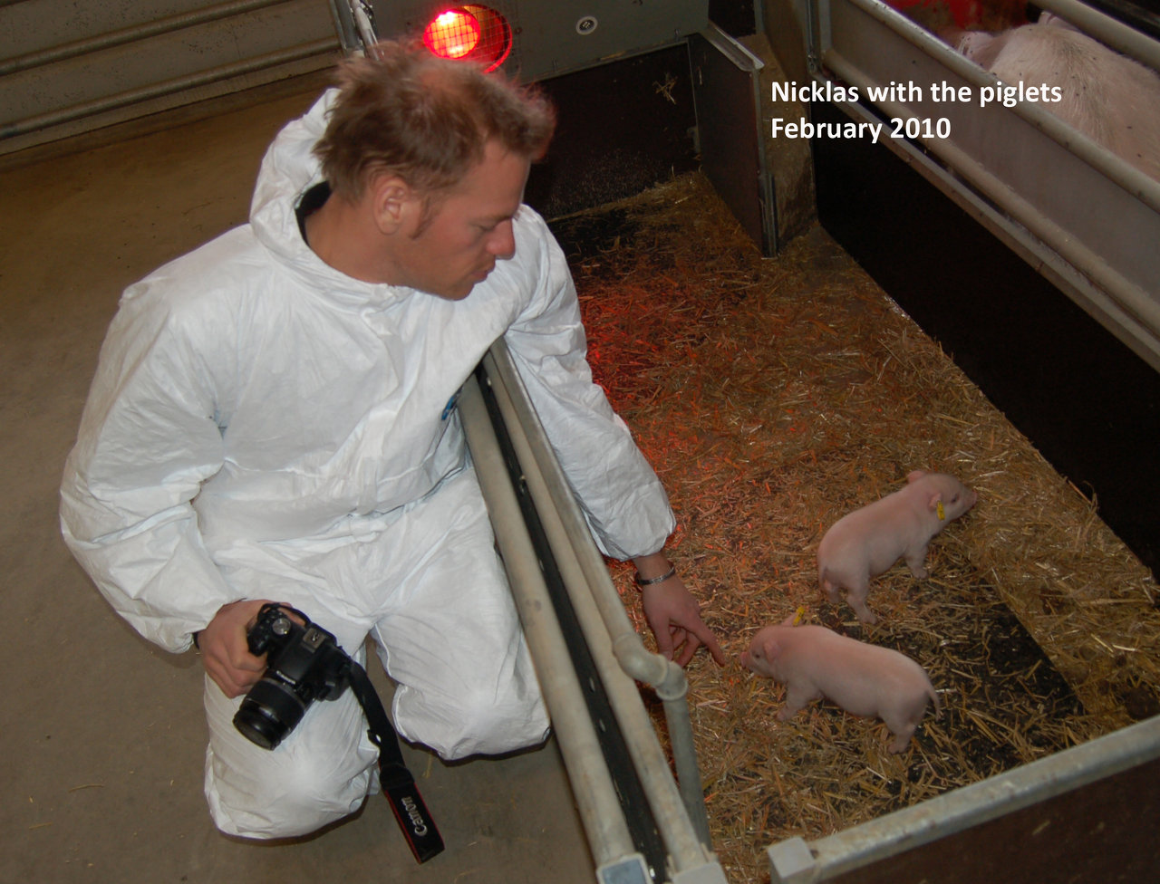 Nicklas with piglets I.jpg