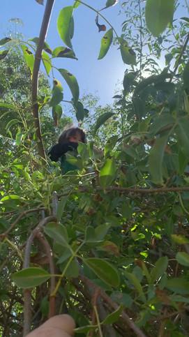 Dallas_Picking Elderberries.mov