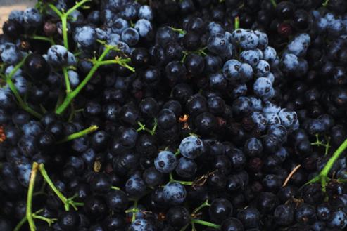 Frozen Elderberries by the Pound