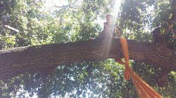 Tree Climbing is Allowed