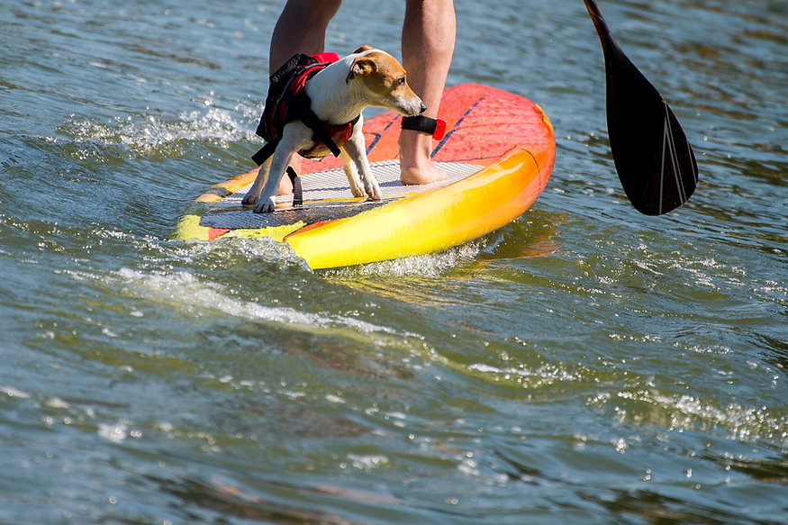 dog and man on SUP shutterstock_11056907