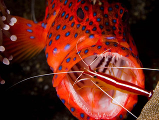 Reducing Waste to Keep the Ocean Clean