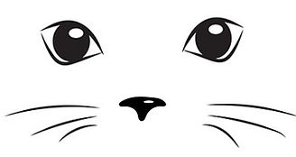 yeux chat.jpg