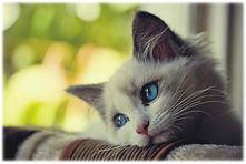 chat triste.jpg
