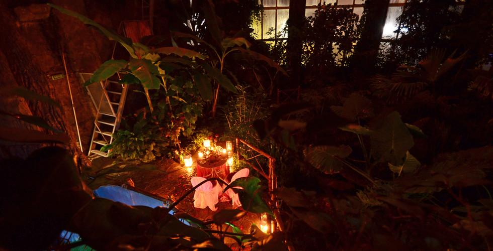 В тропической оранжерее (джунглях) (15).