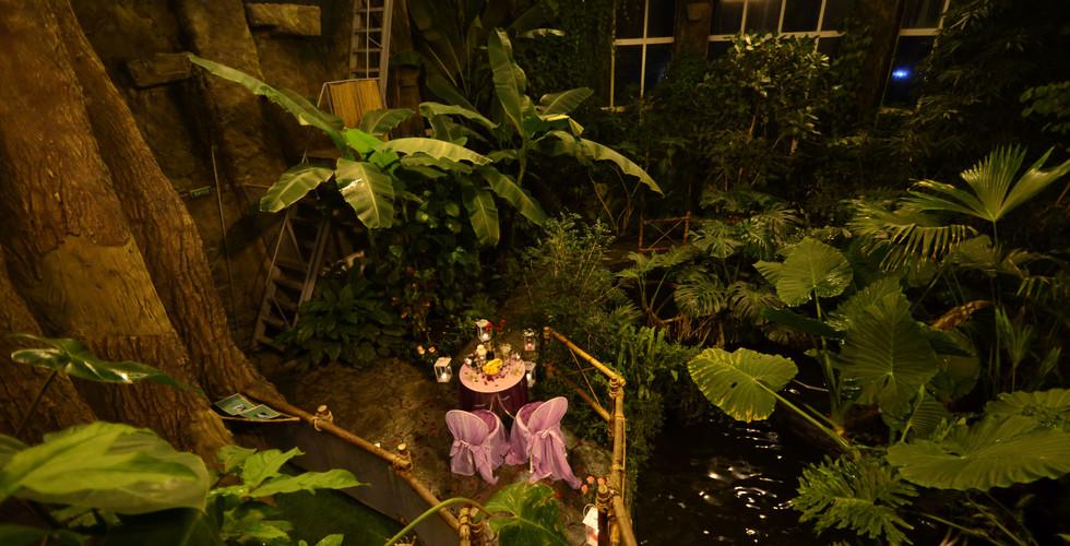 В тропической оранжерее (джунглях) (14).