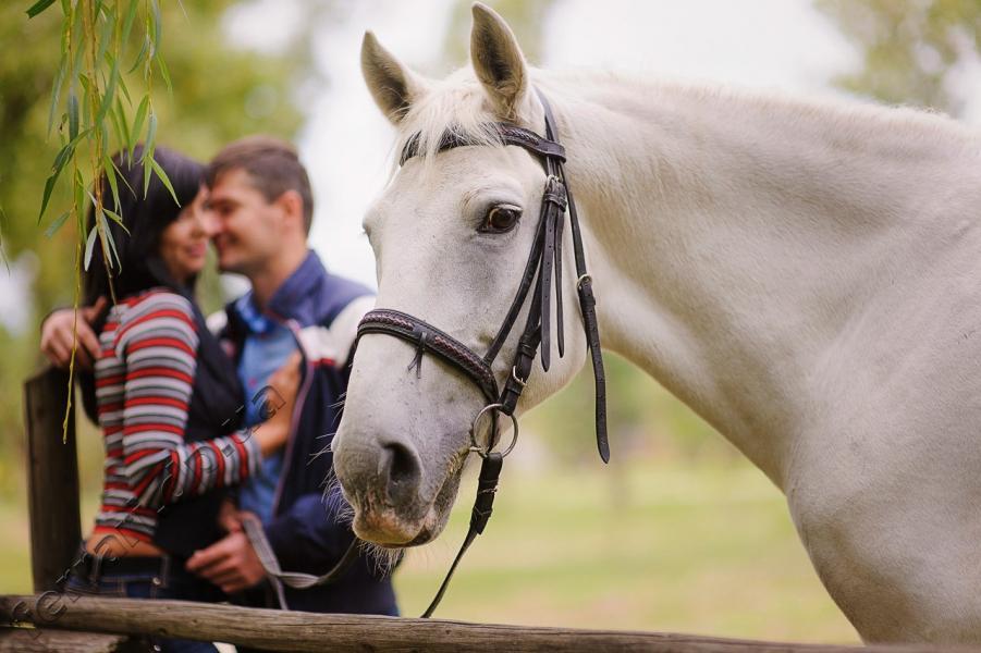 Принц на белом коне