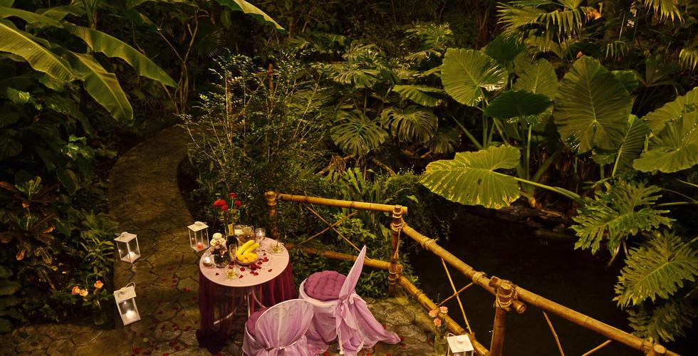 В тропической оранжерее (джунглях) (9).j
