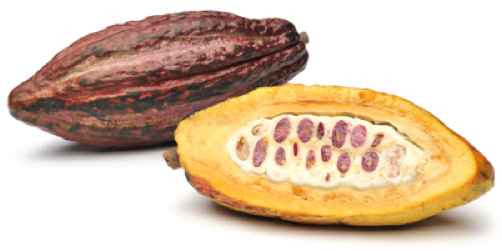 Какао фрукт, Cacao fruit