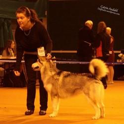 Norwegian Kennel Club - International Dogshow