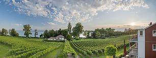 Weingut_Röhrenbach.png