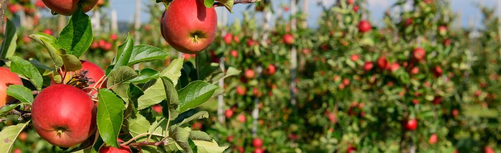 Apfelrundweg Frickingen