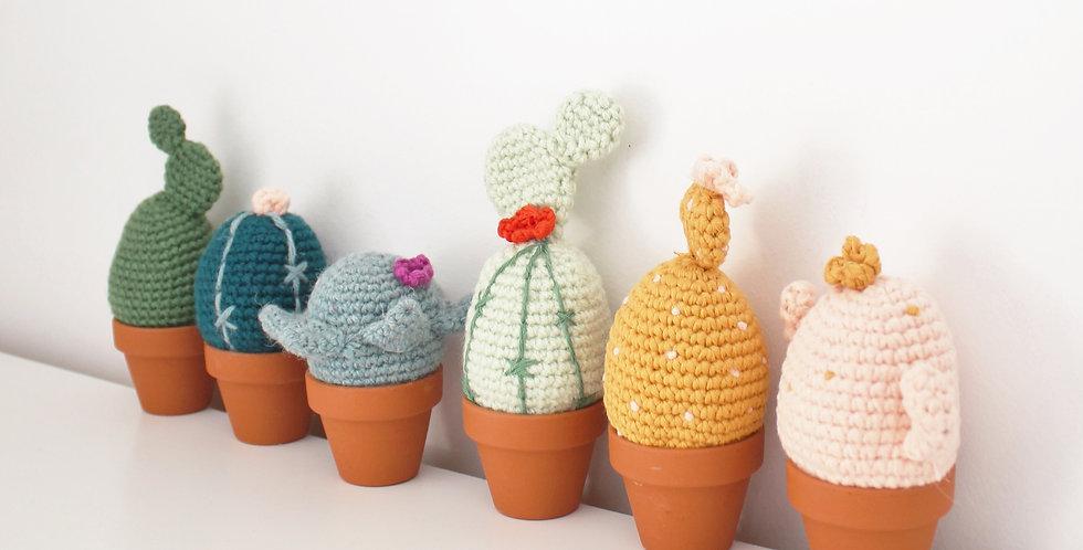 Tutoriel Cactus x6