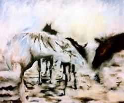 Horse Dream