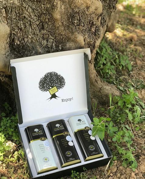 precious-olive-tree-2.jpg