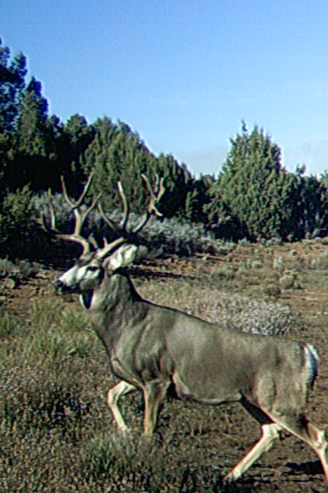 Arizona Elk Guides MD (2)