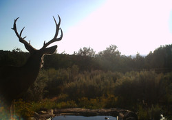 Arizona Elk Guides MD (8)