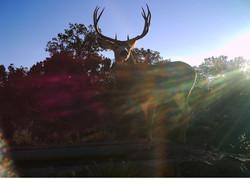 Arizona Elk Guides MD (10)