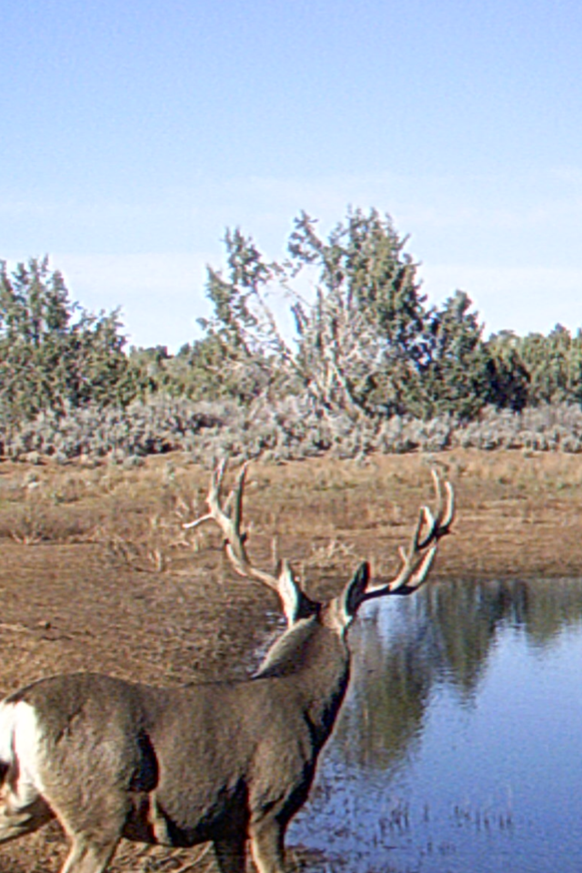 Arizona Elk Guides MD (1)