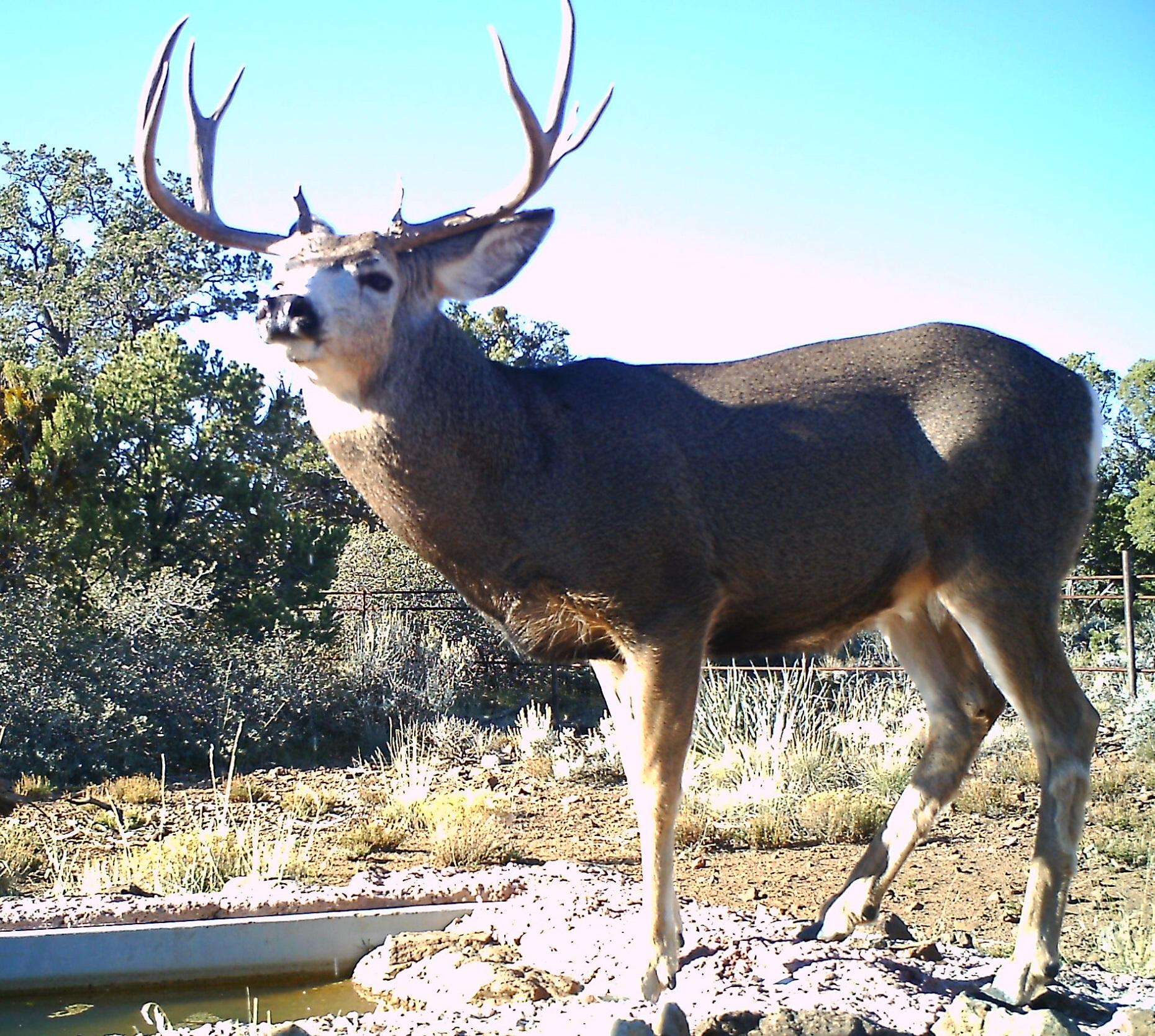 Arizona Elk Guides MD (9)