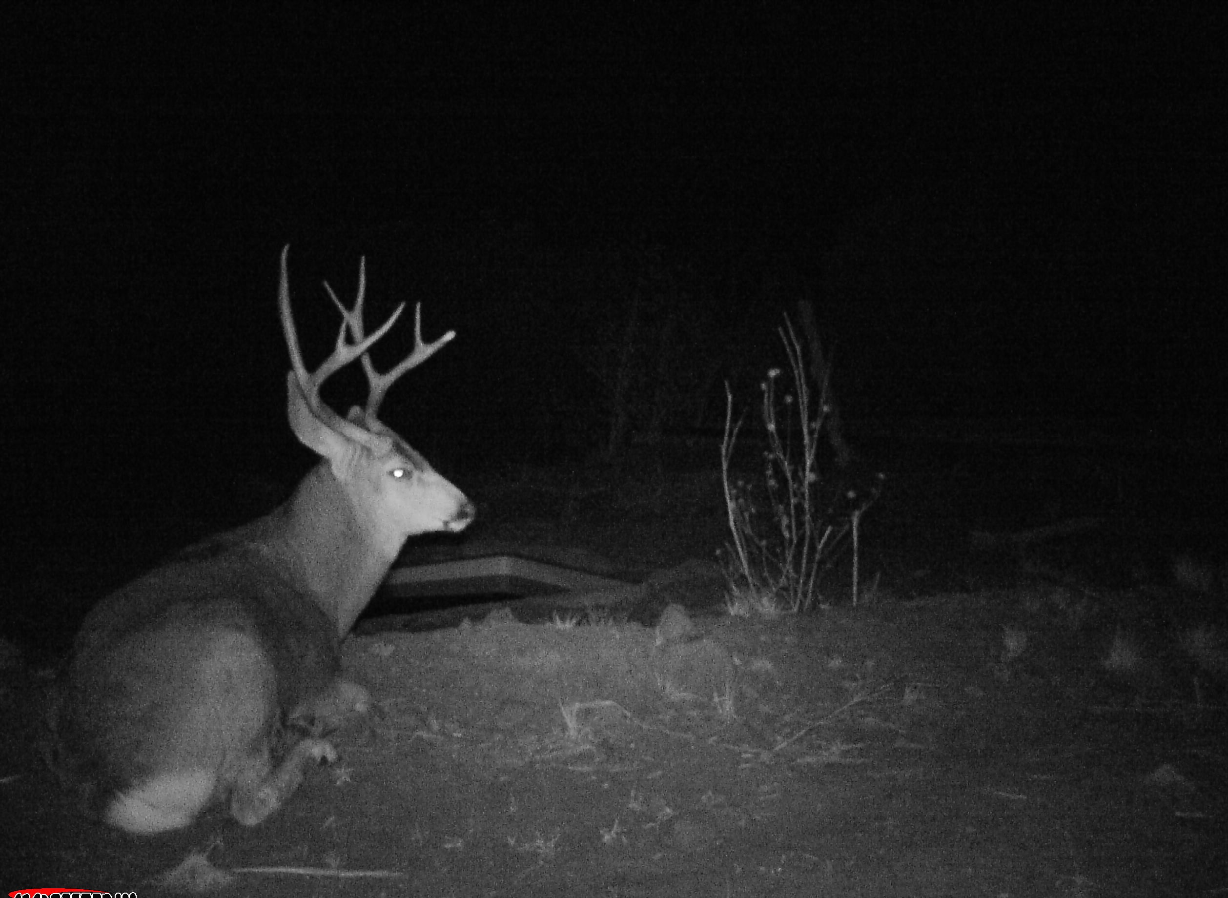 Arizona Elk Guides MD (6)