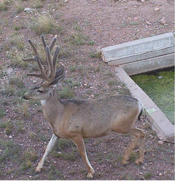 Arizona Elk Guides MD (3)