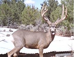 Arizona Elk Guides MD (1)