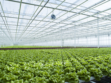 ماذا يمكننا أن نزرع باستخدام الزراعة المائية ؟