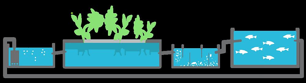 مكونات الزراعة المائية