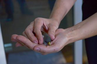 Tráfico de Animais: aves apreendidas ganham a liberdade na área verde do Hospital Mahatma Gandhi