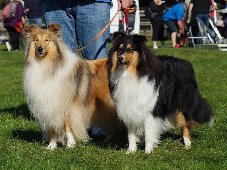 Luna & Mia (Our Dogs)