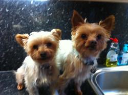 Milly & Rupert