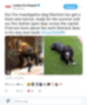LFB Tweet 1.jpg